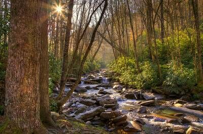 smoky mountains national park national parks free on veterans day