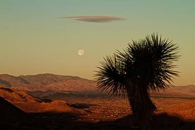 joshua tree national park national parks free on veterans day