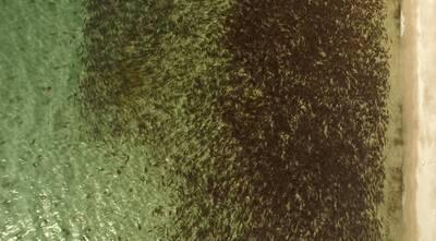 above iliamna salmon run 2015 close up