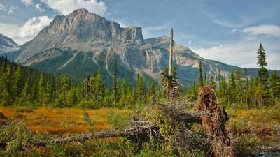 yoho national park parks canada free