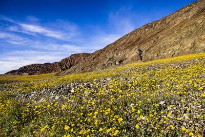 epic winter hikes death valley super bloom