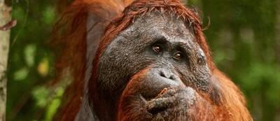 leonardo, the environmentalist saving 30 hills in sumatra