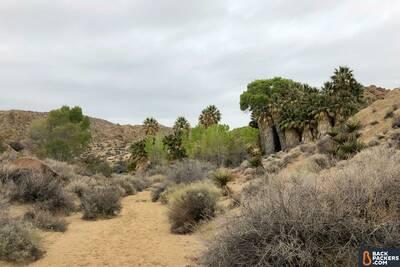 Havasupai Falls Hike in Arizona Joshua Tree