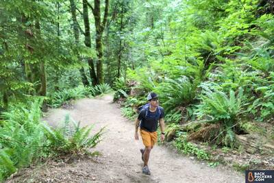 hiking-on-trail-in-ferns-and-trees