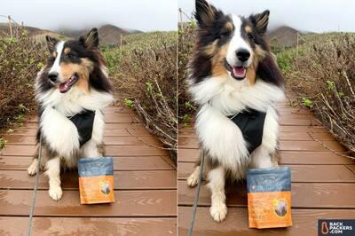 1-Jiminy's-Sustainable-Dog-Treats-on-trail-smiling-1