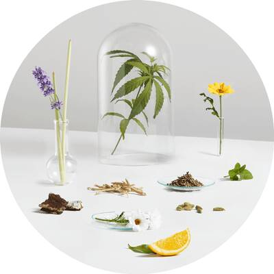 Healist naturals Supporting Ingredients