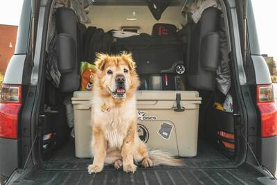 How to Road Trip with Pets
